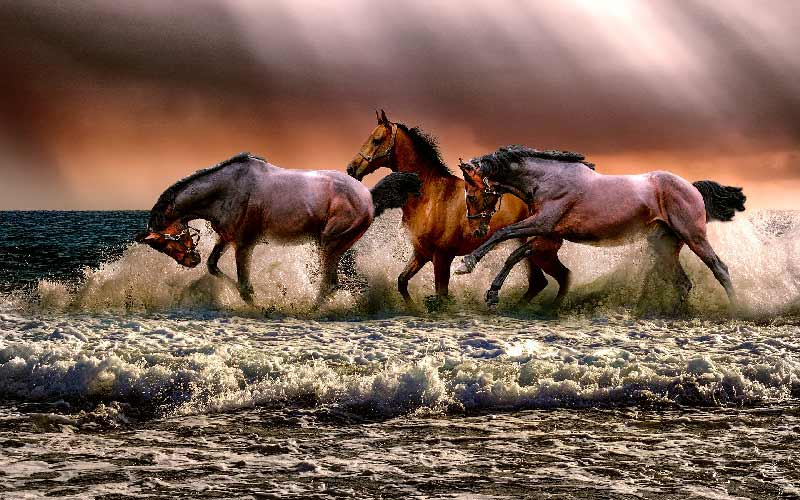 Turbulent Horses Destress Seashore